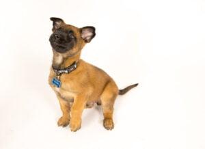 puppy training school Salt Lake City Utah