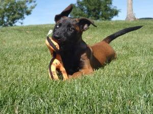puppy training Salt Lake City