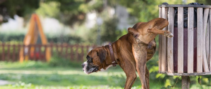 Dog Training Challenges: Why Does Your Dog Urine Mark?