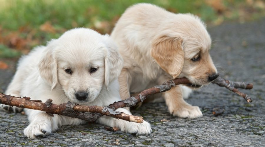 Puppy School Is Cool… for Socializing Your New Pet