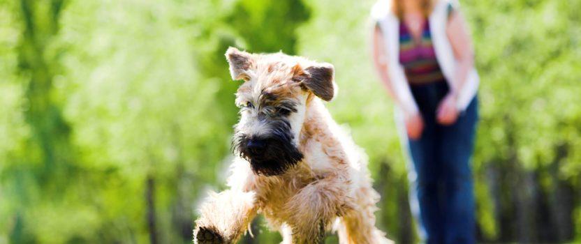 Puppy Training Basics: Handling Fear Imprint Periods
