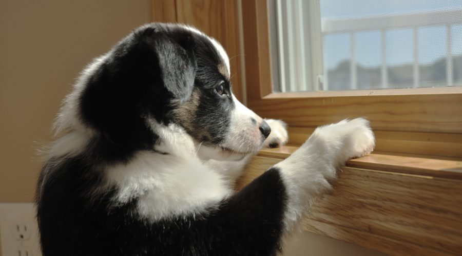 Dog Separation Anxiety: How to Solve an Epic Problem