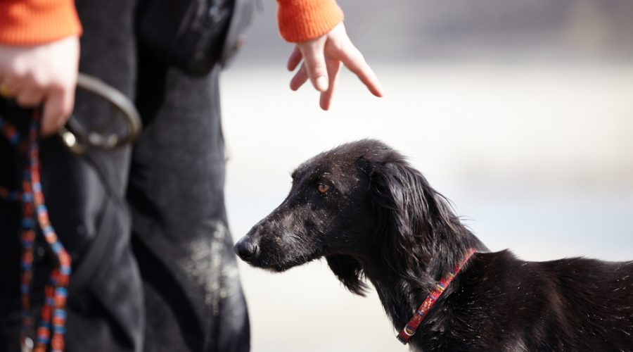 Dog Trainers' Tips to Address Resource Guarding Behavior