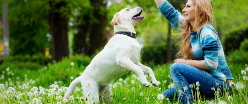 "Dog Training Basics: Recall on Command, aka ""Come"""