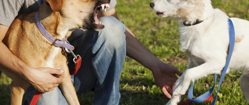 Is Dog Aggression Influenced by Human Behavior?