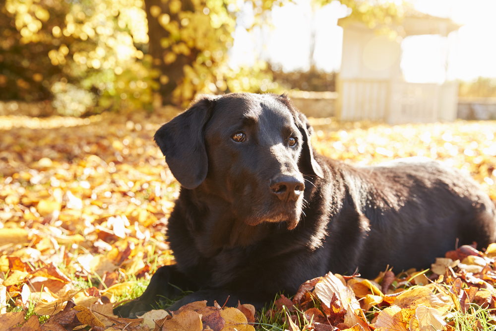 Dog Training for Senior Dogs