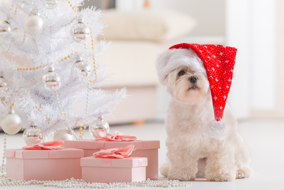 Dog Training for the Holidays
