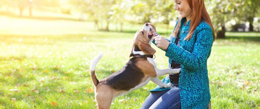 Is Off-LeashTraining Possible for Your Dog?