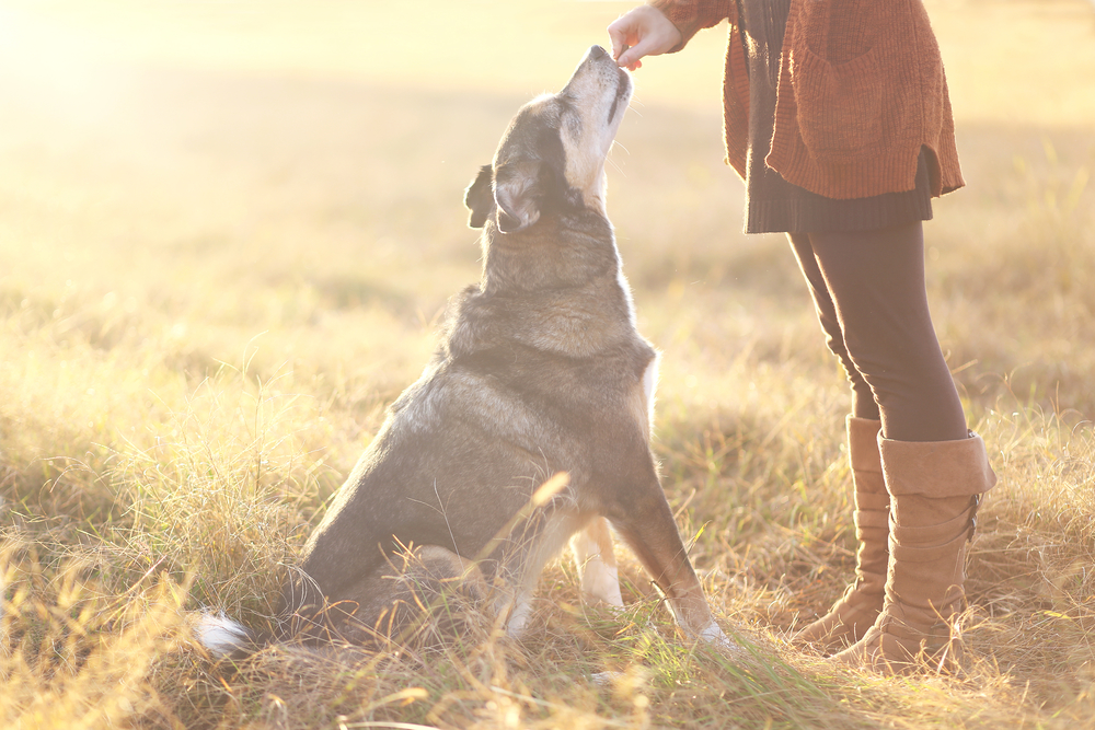 Why Dog Trainers Recommend Positive Reinforcement Training