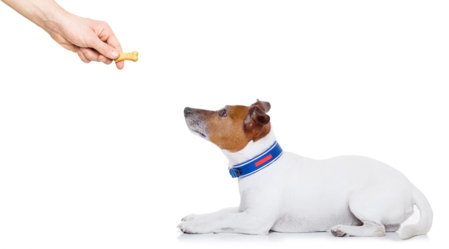 Why Dog Training by Positive Reinforcement Really Works