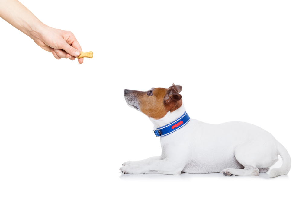 dog training by positive reinforcement