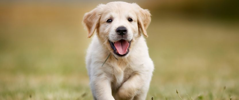 Puppy Boot Camp Helps Start Your Pet Off Right