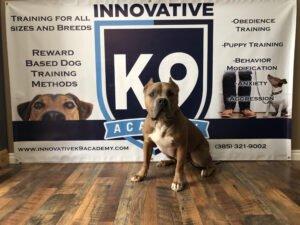 PitBull Dog Boot Camp Graduate