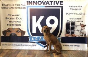 Dog Training Boot Camp Graduate