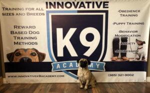 Dog Boot Camp Graduate