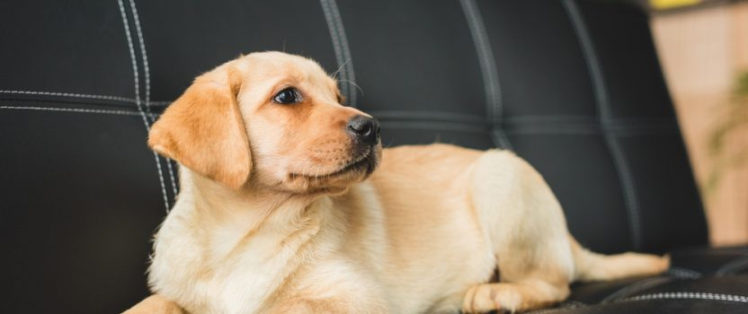 Are YouTraining Your Dog's Bad Behaviors?