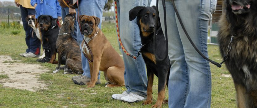 8 Reasons to Consider Dog Boot Camp