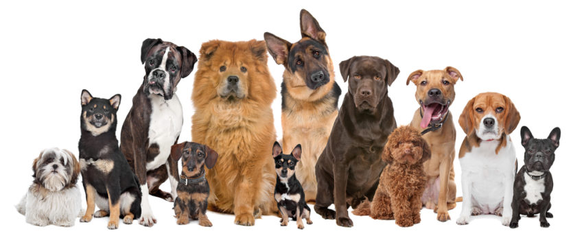 Possessiveness: A Dog Behavioral Problem You Should Worry About?