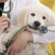 Dos and Don'ts of Taking Your Dog to the Vet
