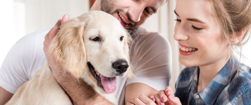 """Talk to a Dog Trainer Before Surrendering a """"Problem"""" Dog"""