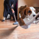 Ask the Dog Trainer: Why Is My Dog Afraid of the Vacuum?
