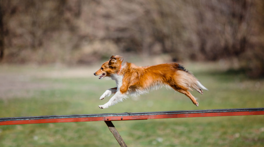 Can Dog Training Make Your Pet Smarter?
