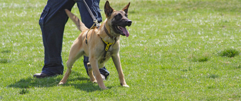 Should You Seek Dog Training for Aggressive Dog Breeds?