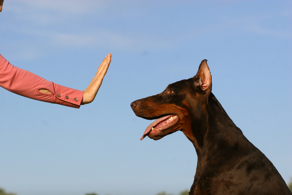 Professional Dog Trainers in Provo, Utah