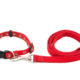 Dog Trainer's Guide to Choosing a Collar & Leash