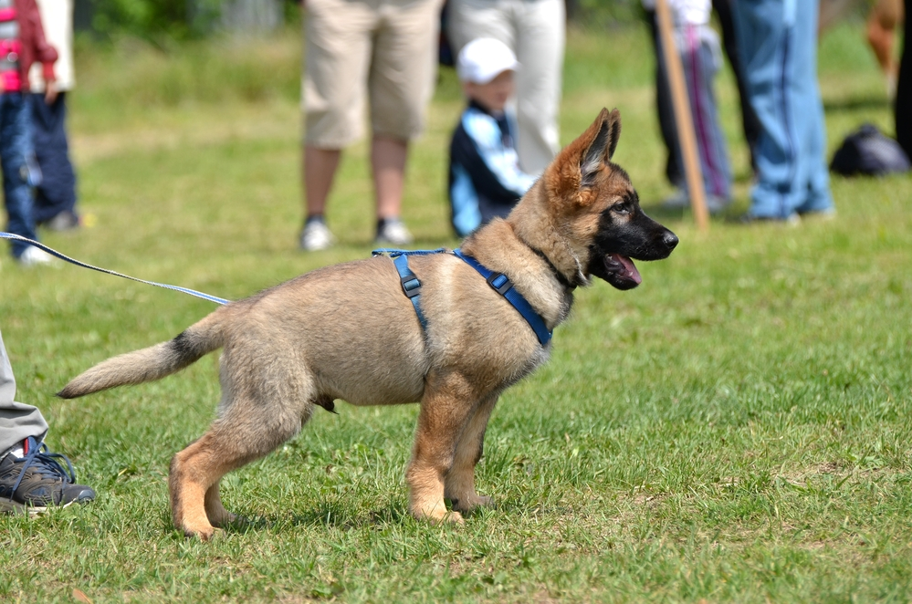 Deciding between private and group dog training sessions Here's how to choose.