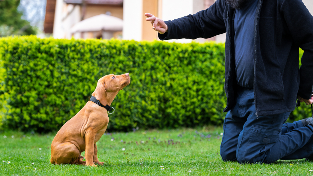 Dog training for puppies or rescue animals can improve behavior and obedience.